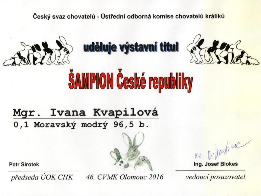 Šampion ČR, moravský modrý